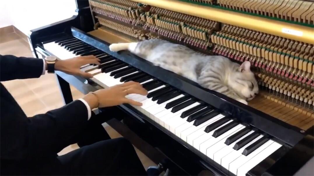 Właściciel gra na pianinie, kot słucha i zasypia