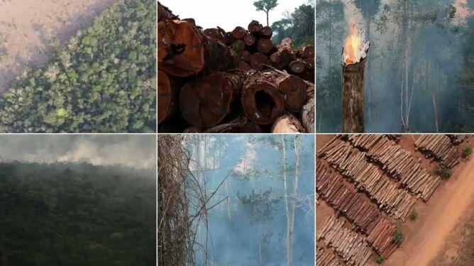 Puszcza Amazońska ginie. W ciągu roku zniknął las o powierzchni Jamajki