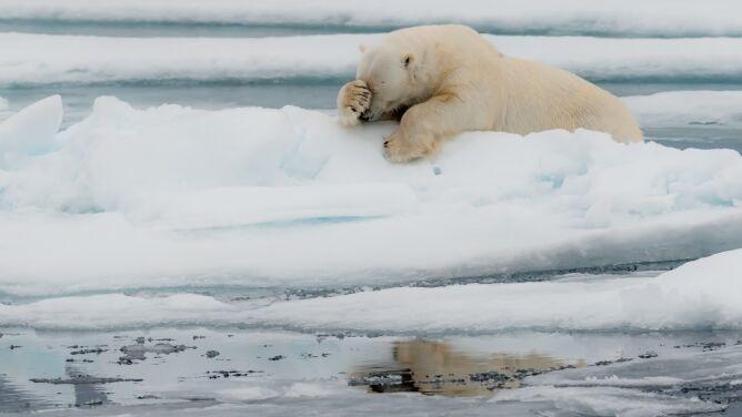 Lew morski ćwiczący jogę, lamentujący niedźwiedź, uśmiechnięta foka. Te zdjęcia poprawiają humor