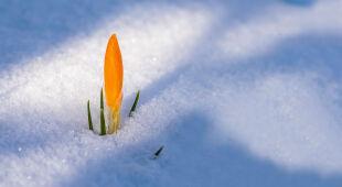 W kalendarzu zima, ale pogoda wiosenna