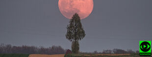 Różowy Księżyc w obiektywach Reporterów 24
