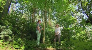 Bożeny i Leszka Leśny Ogród (Odc. 571)